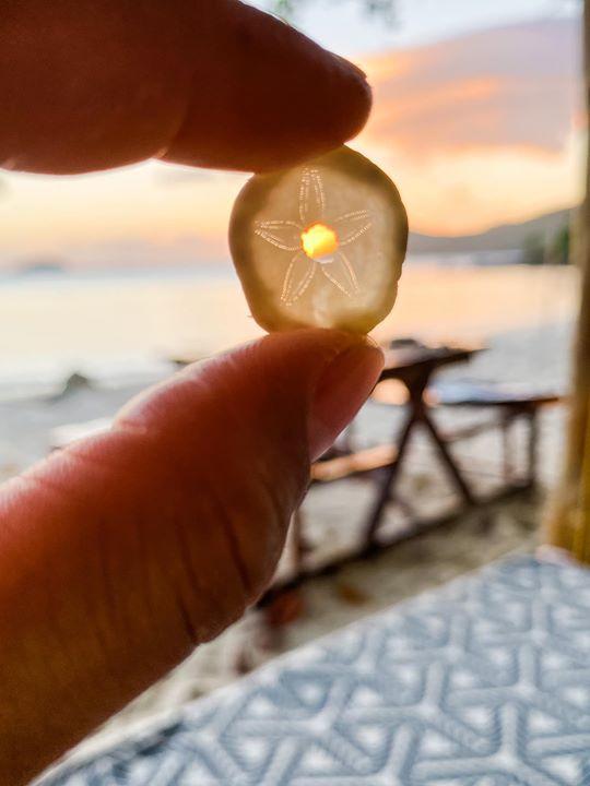 Sand dollar found at the beach-rare coll