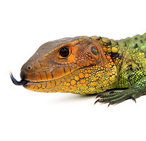 DFW Reptarium | Pets | Reptiles | Supplies | Feeders | Gifts | Plano