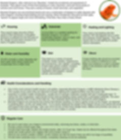 CareSheet-BeardedDragon.jpg