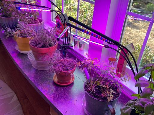 Make Yourself an Indoor Herb Garden