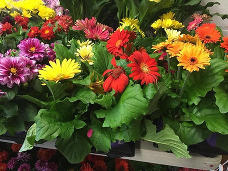spring plant sale 3.jpg