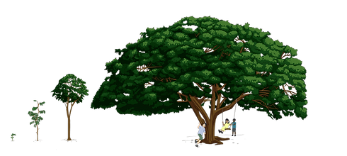 200604_Grief Mod 4_Tree_coloured_V2.png
