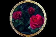 roseart2_edited_edited.png