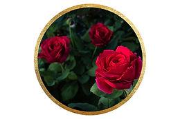 roseart2.jpg