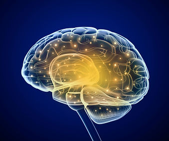 A transparent brain