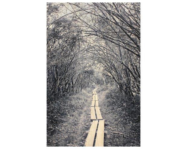 Didyoung_Privy-Path (CT)_f.jpg