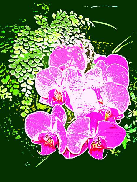 Didyoung_-For-My-Dear-Adelaide_Digital.j