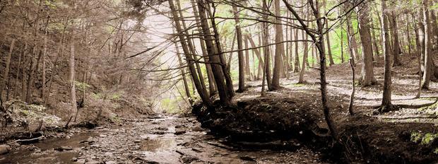 Didyoung_Forest-Edge_Digital.jpg