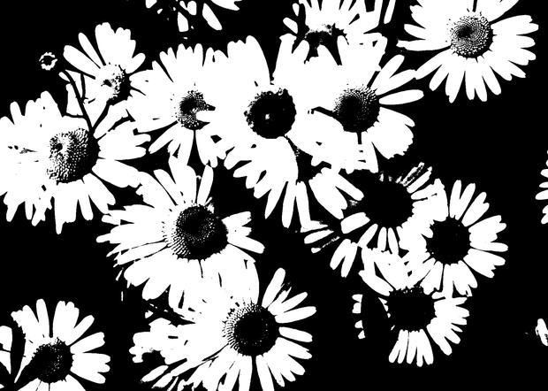 Didyoung_Wildflower_Digital.jpg