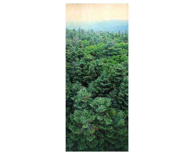 Didyoung_-Green-Mountains (VT)_f.jpg
