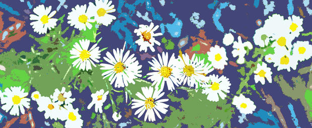 Didyoung_Pollination_digital.jpg