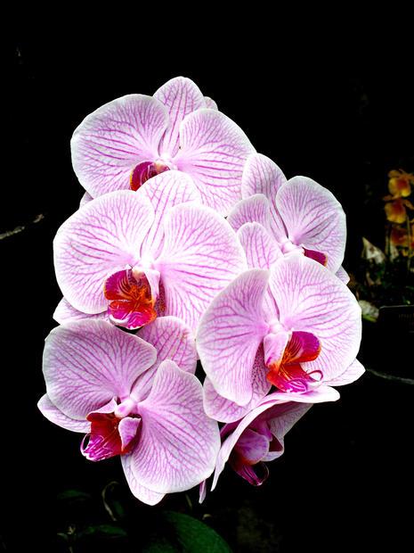 Didyoung_Orchid-Dance_Digital.jpg