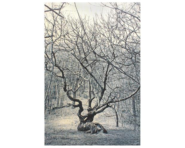 Didyoung_Famous-Gnarled-Oak-at-Bly-Gap (