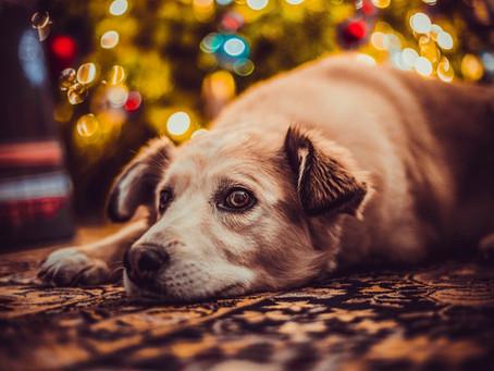 Christmas pet hazards
