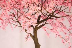 Аренда дерева Сакура