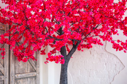 "Аренда дерева "" Сакура малиновая"""
