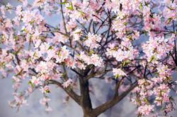"""Аренда дерева """" Цветущее """""""