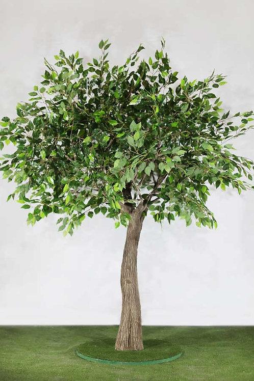 Аренда искусственного дерева Фикус 2 м.