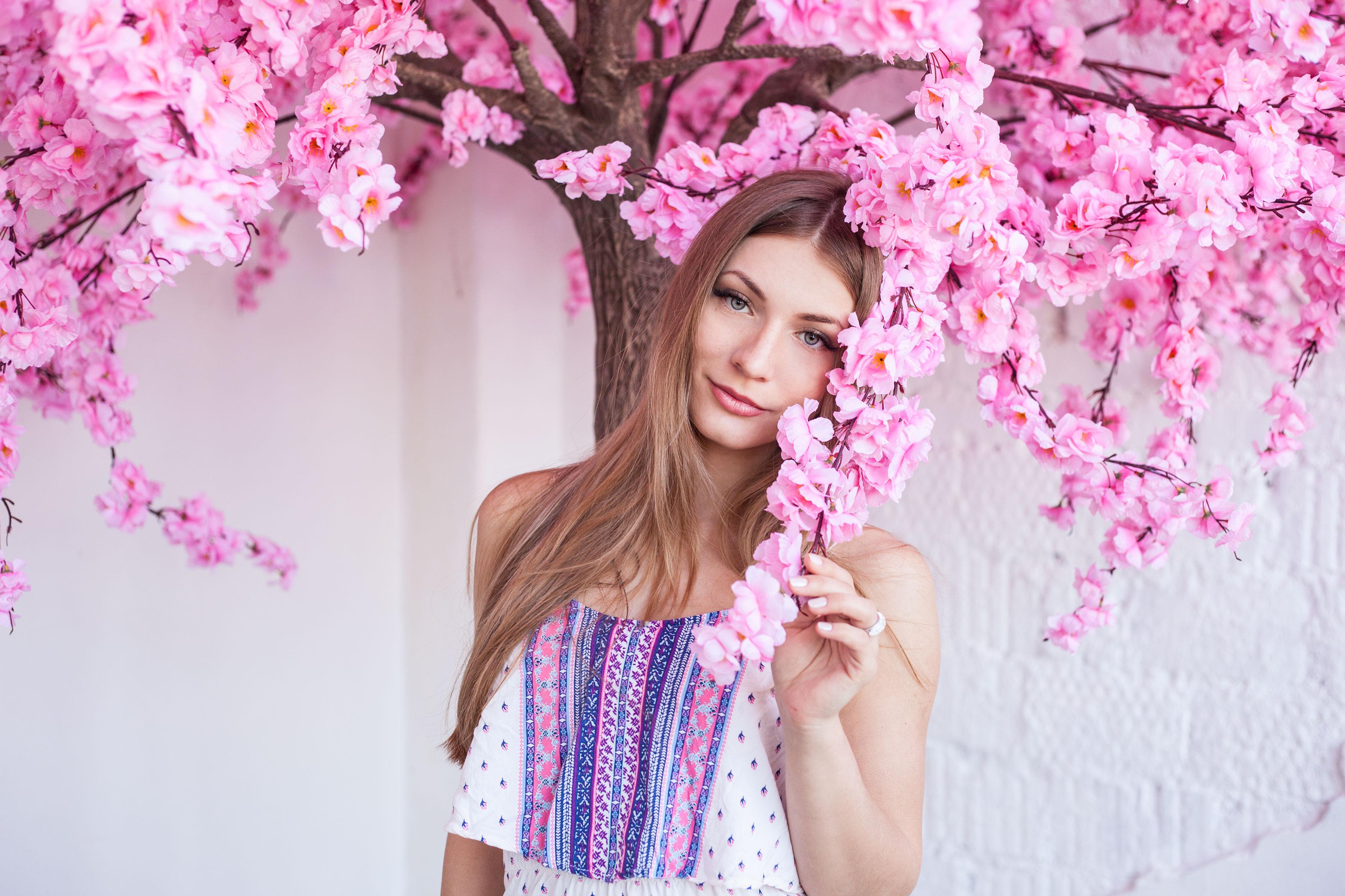 Аренда Дерева Сакура Розовая.