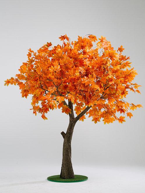 Аренда дерева Клен Осенний 2.6м