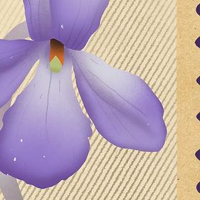 Bird's Foot Violet-02.jpg