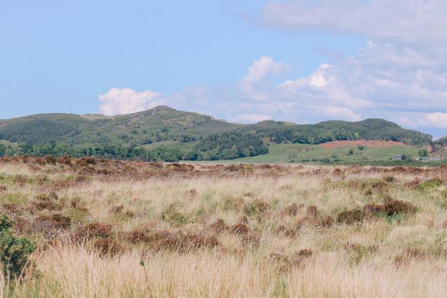 Scottish Prairie