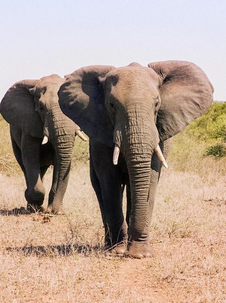Kruger National Park, Part I