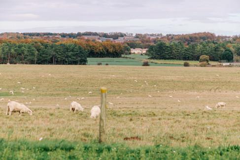 Stonehenge Views