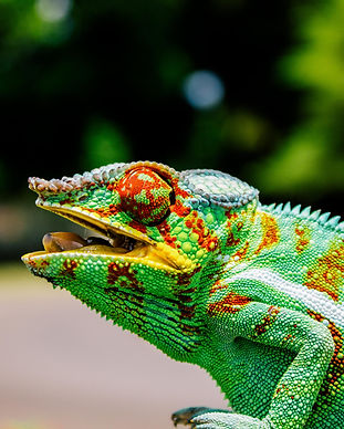 Madagascar-30.jpg