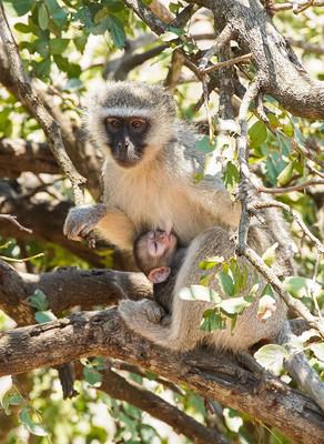 Kruger National Park, Part II