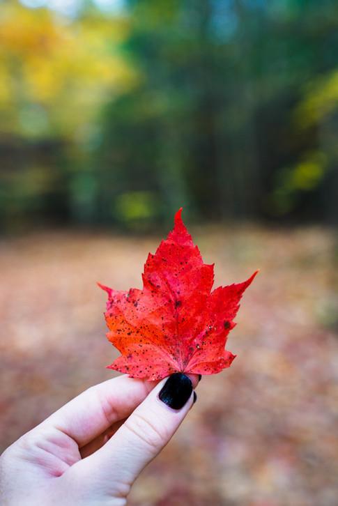 Leaf Peepin'