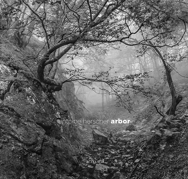 arbor-pour-wix2.jpg