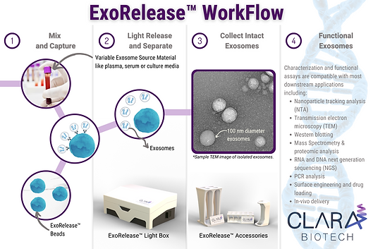 Clara Biotech Workflow (branded).png