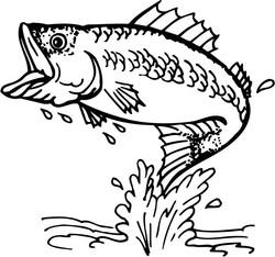 Fish 2015