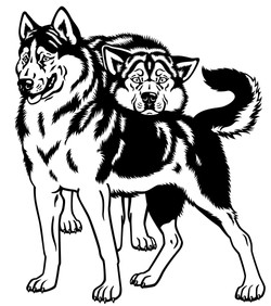 Siberian huskies 2014