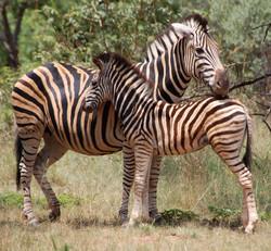 Stripy pair