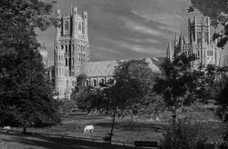 Ely cathedral from the meadows