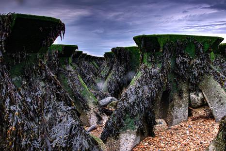 Cobbolds Point