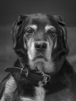 The Old Boy