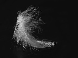 White Feather on Frozen Pond