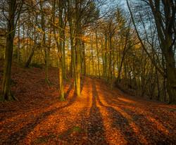 Morning Shadows
