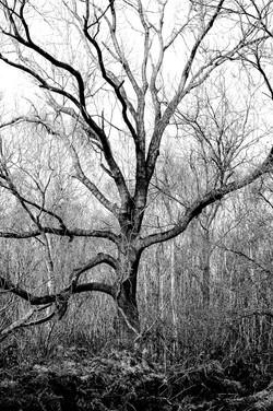 Bradfield Wood in Winter