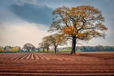 Chocolate Field