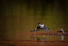 A dipper with a pretty unusual lunch