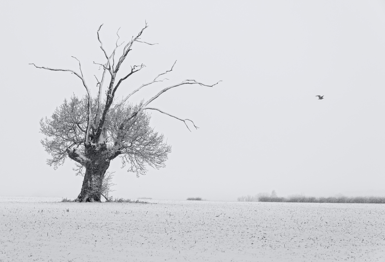 Snowy Suffolk