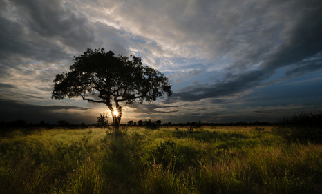 African Evening