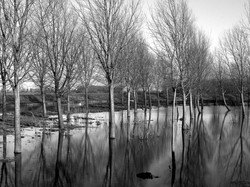 Flooded Coppice