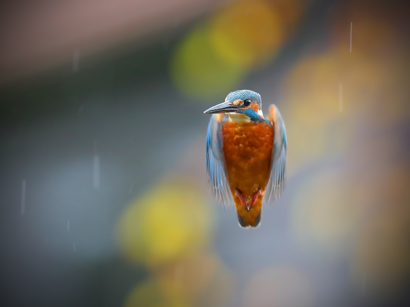 Hovering in the rain Landscape