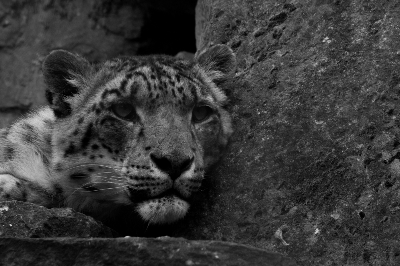 Snow Leopard Not Doing Anything!!