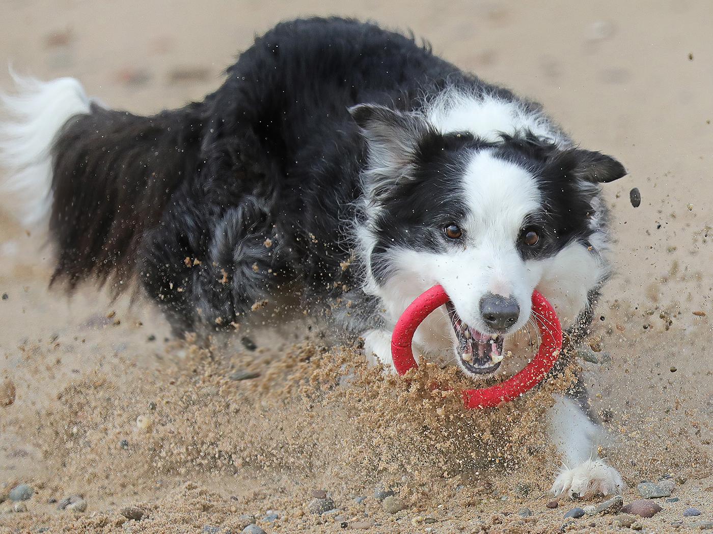Sand Flies